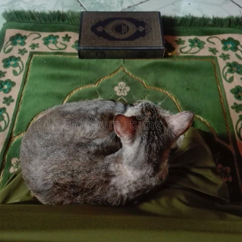 Pregando con il gatto immagini stock
