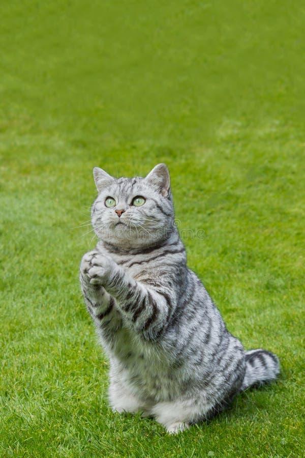 Pregare gatto su erba verde fotografia stock libera da diritti