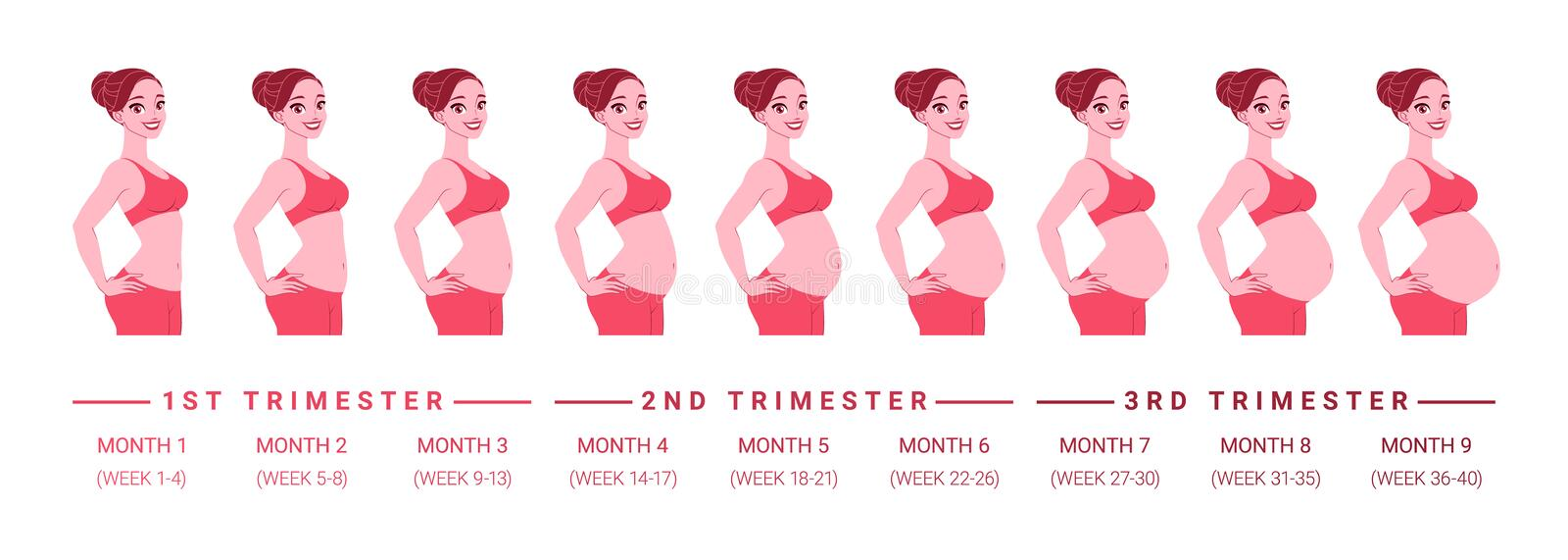 Pregnancy development by months. Isolated vector illustration. vector illustration