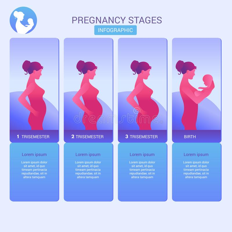 Trimesters of pregnancy three Pregnancy: The