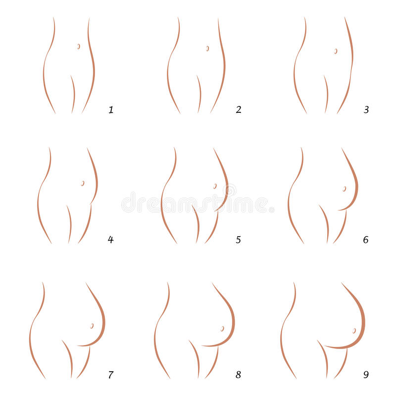 Pregnancy Growth Belly Sequence Nine Steps stock illustration