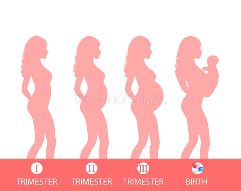 stages of pregnancy trimesters images galleries with a bite. Black Bedroom Furniture Sets. Home Design Ideas