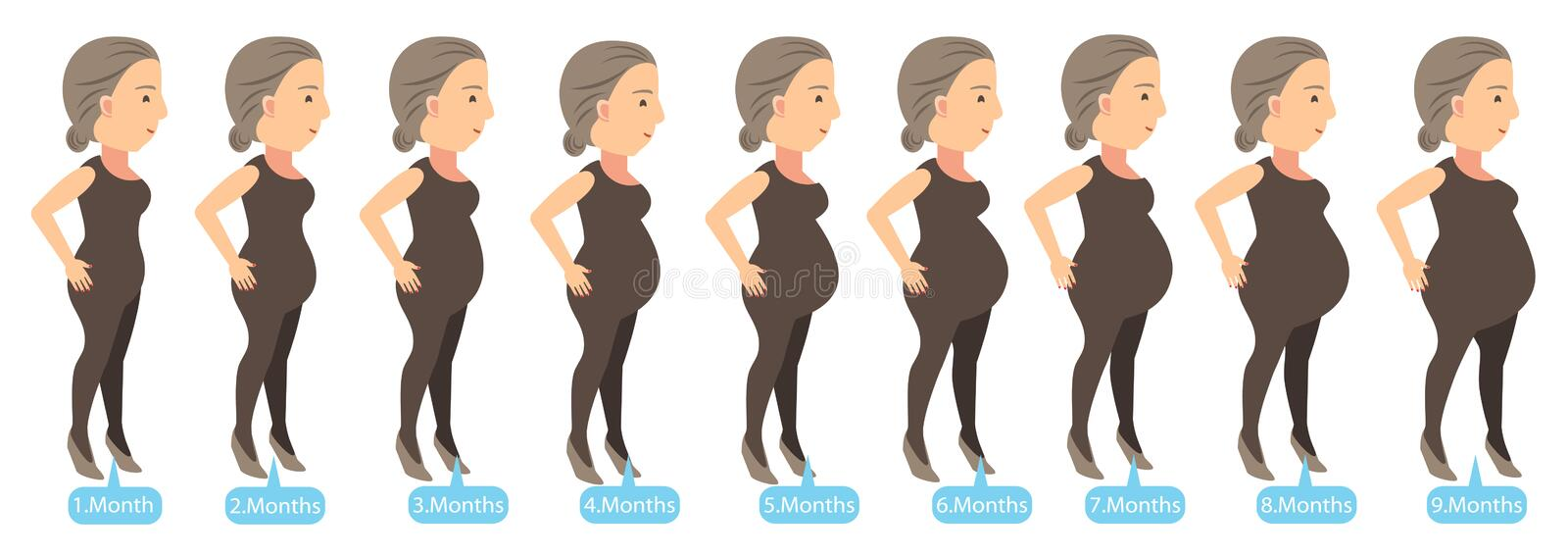 Pregnancy Stages. Stages of changes in a woman's body in pregnancy. Vector illustration vector illustration