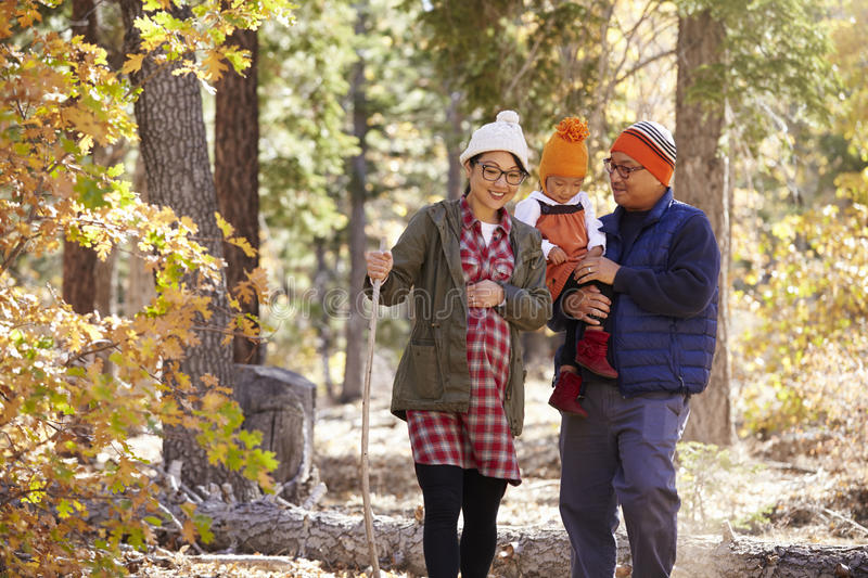 Pregnant Asian mother and family hiking in forest, close up stock photos