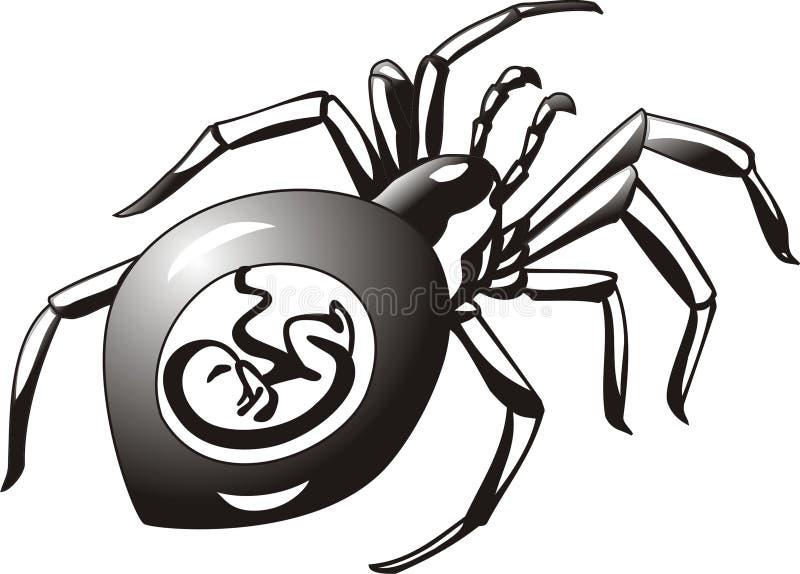 Pregnant Spider 2 Stock Photo