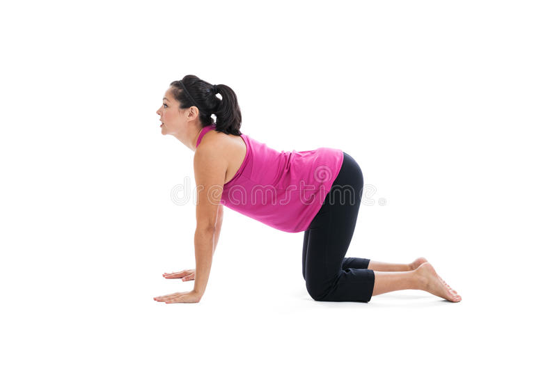 Pregnant woman doing yoga cow pose royalty free stock images