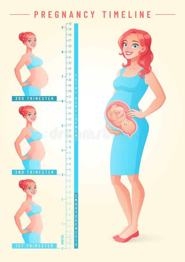 Pregnant woman with fetus. Pregnancy timeline vector illustration. stock illustration