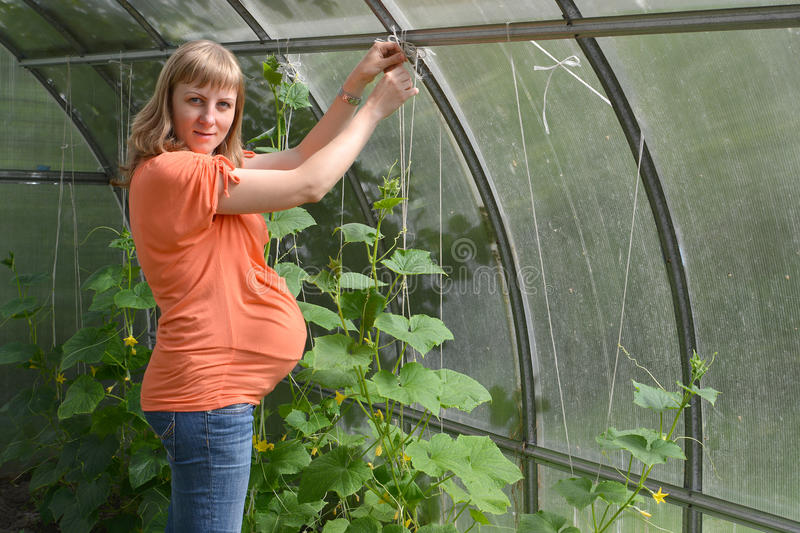 The pregnant woman ties up plants stock image