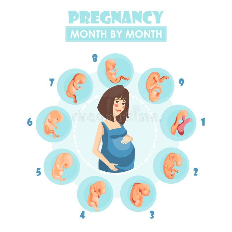 Pregnant woman. Vector colorful illustration with pregnancy concept vector illustration
