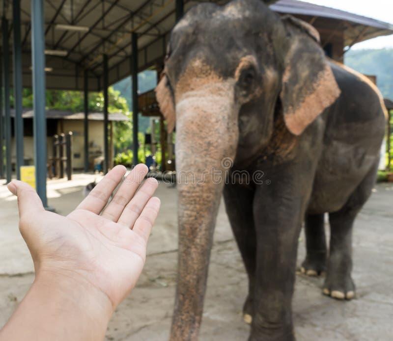 Prego diami la mano o il tronco 1 fotografia stock