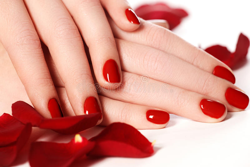 Pregos fêmeas bonitos do dedo com o close up vermelho do prego nas pétalas P imagens de stock