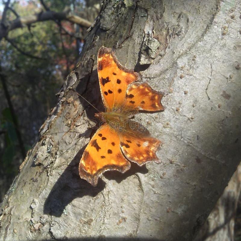 Pregunta Mark Butterfly imagen de archivo libre de regalías