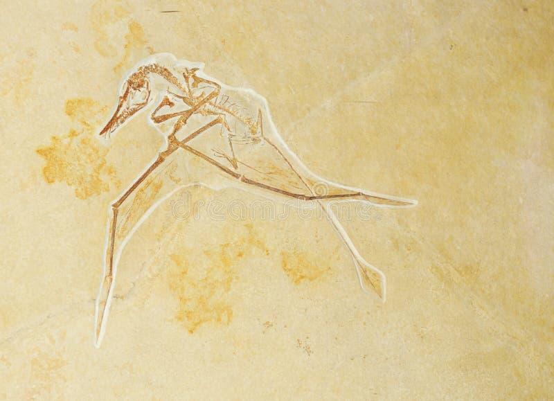 Prehistoric background stock photo