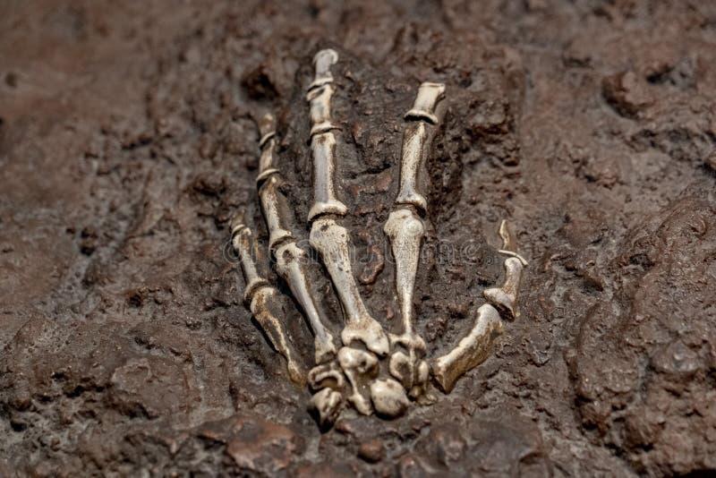 Prehistoric bone skull hand inside a rock stock images