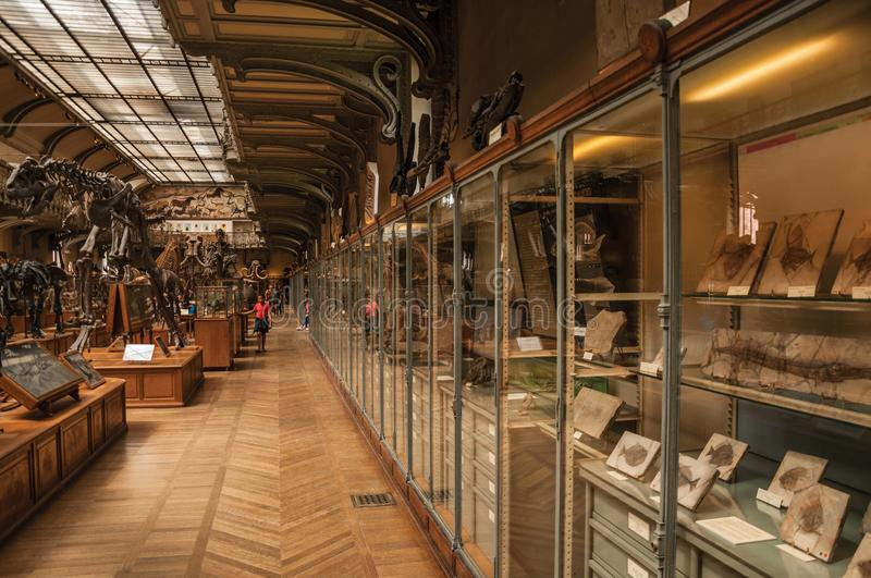Prehistoric skeletons and fossils at Gallery of Paleontology and Comparative Anatomy in Paris. Paris, northern France - July 10, 2017. Prehistoric skeletons and stock photography