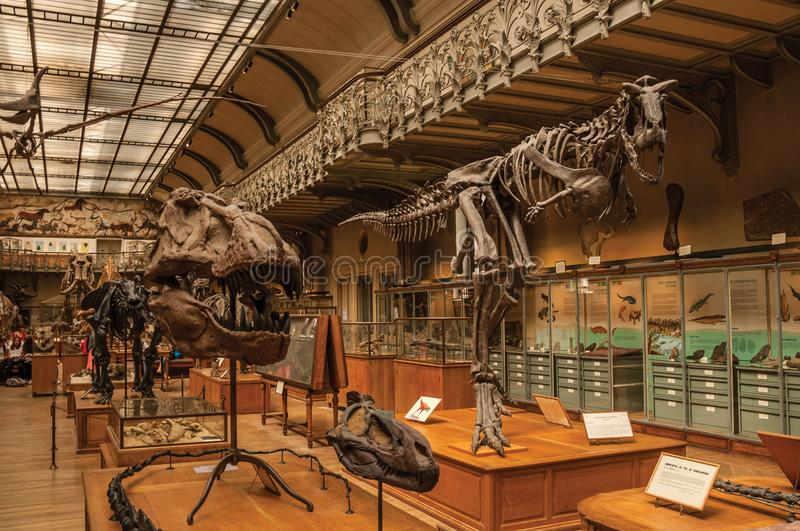Prehistoric skeletons and fossils at Gallery of Paleontology and Comparative Anatomy in Paris. Paris, northern France - July 10, 2017. Prehistoric skeletons and royalty free stock photography