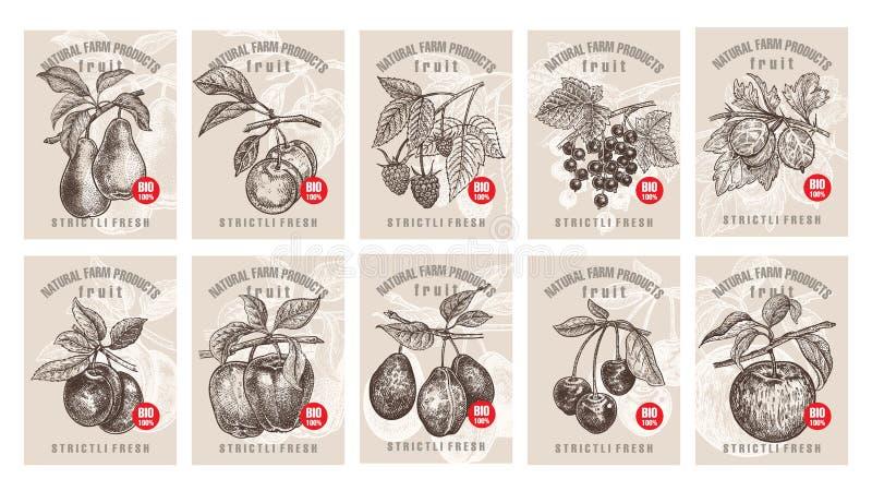 Preise für Beeren und Früchte lizenzfreie abbildung