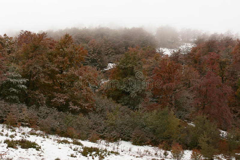 Première neige d'automne photo libre de droits
