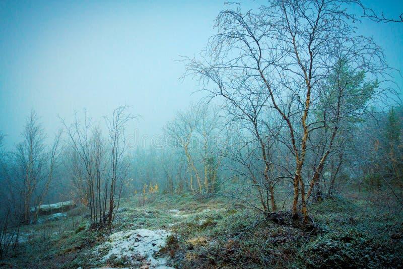Première neige dans la forêt images stock