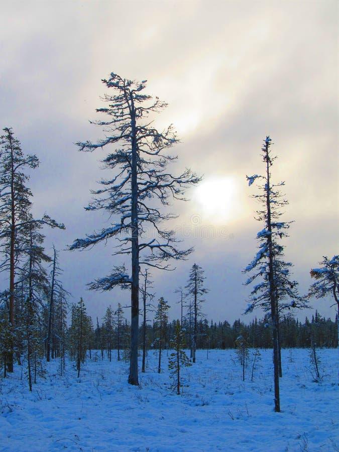Première neige en Finlande du nord, automne marais photo libre de droits