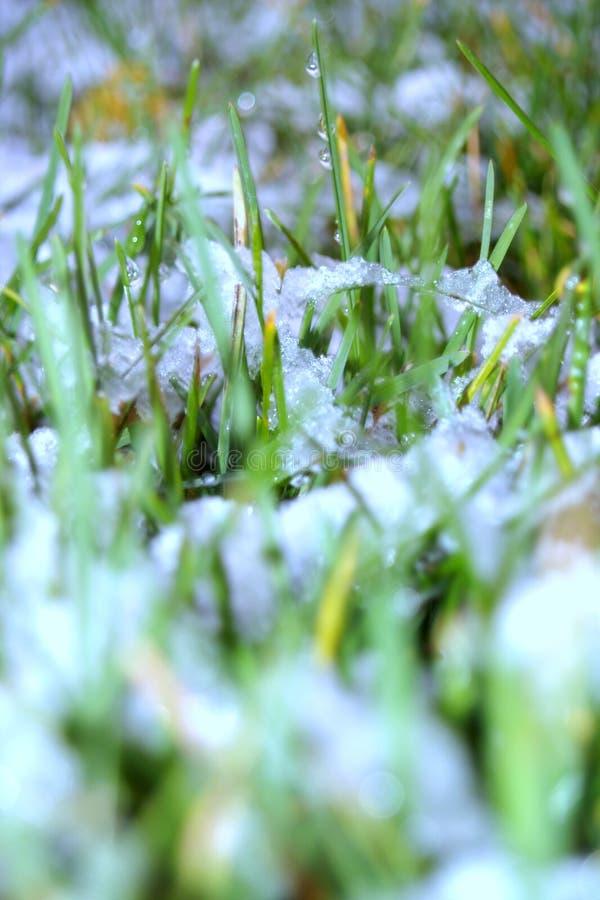 Première neige sur la pelouse photos stock