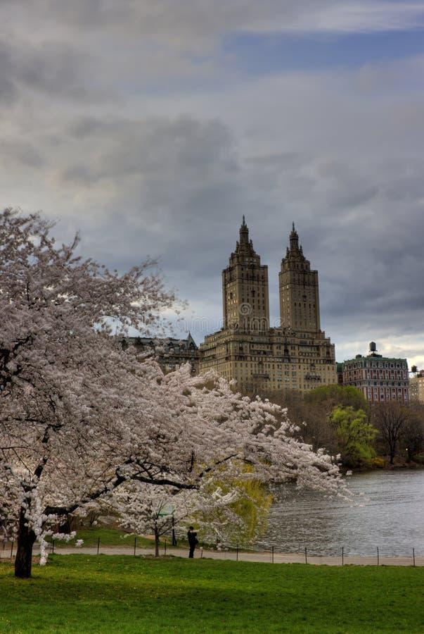 Première source dans Central Park photos stock