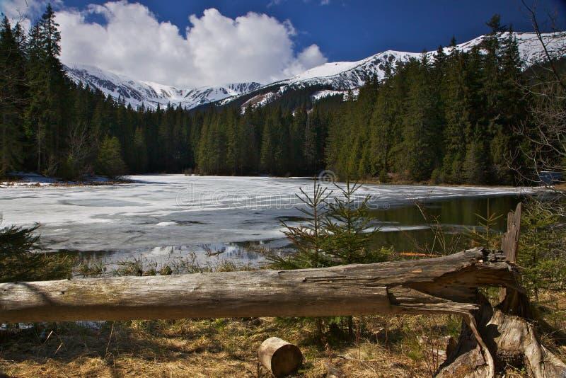 Première source en montagnes de la Slovaquie photo libre de droits