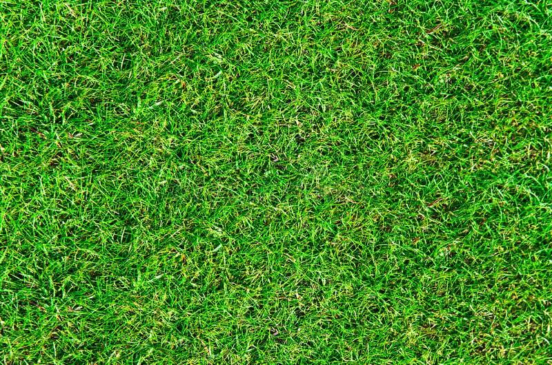 Première vue d'herbe fraîche de pelouse photo libre de droits
