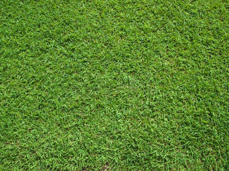 Première vue d'herbe verte photographie stock libre de droits