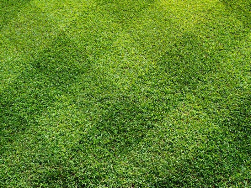 Première vue de belle pelouse carrée de son images stock