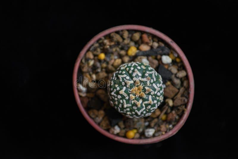 Première vue de cactus photographie stock libre de droits