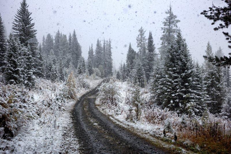 Premières chutes de neige d'automne images libres de droits