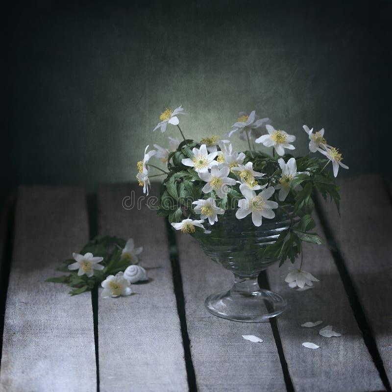Premières fleurs de source photographie stock