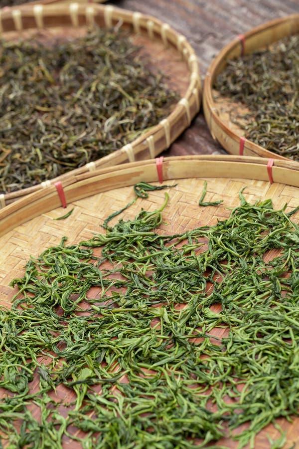 Premie het Droge groene theebladen uitgespreide genezen in het dienblad van de bamboemand na oogst stock fotografie