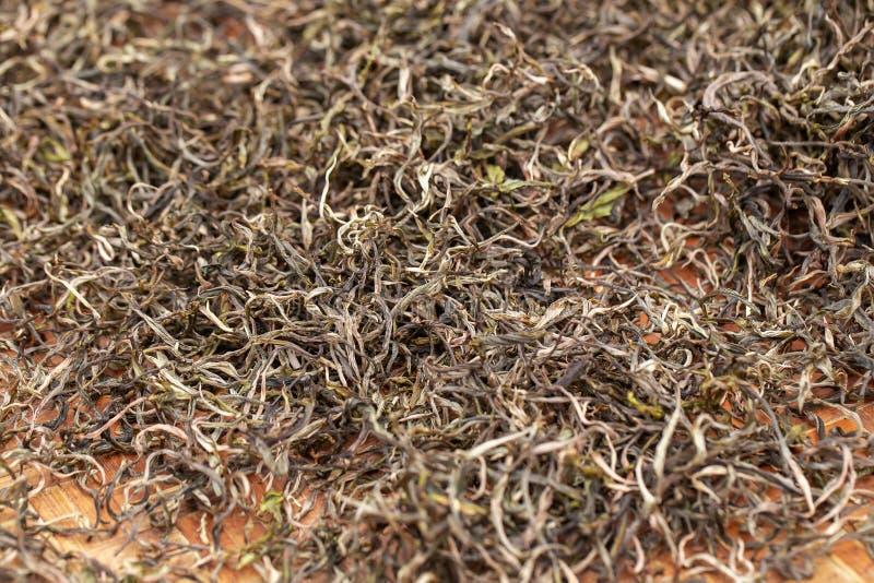 Premie het Droge groene theebladen uitgespreide genezen in het dienblad van de bamboemand na oogst stock afbeelding
