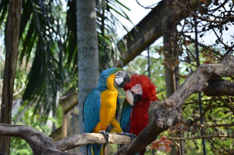 Premier baiser photos libres de droits
