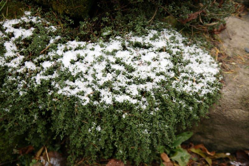 Premier jour de l'automne et du premier gel photo stock