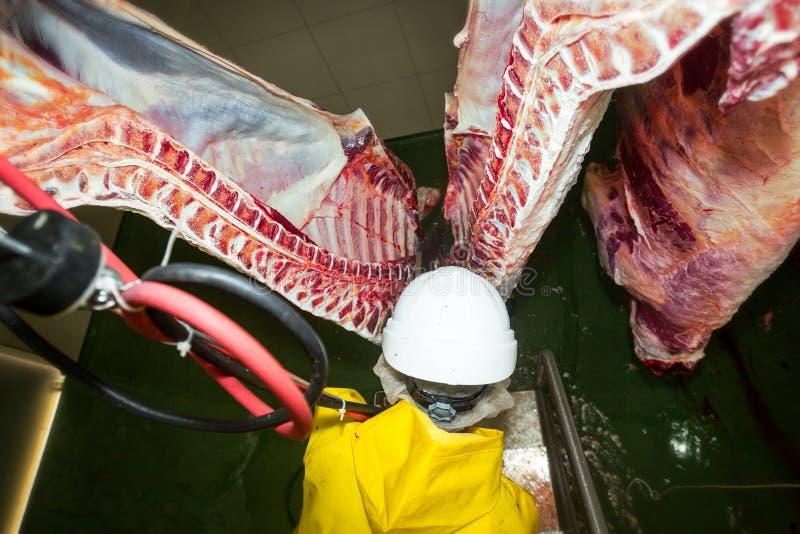 Premier Person View Of qu'une ouverture de poitrine de bétail a vu image stock