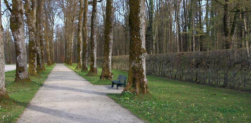 Premier ressort : belle allée en parc image libre de droits