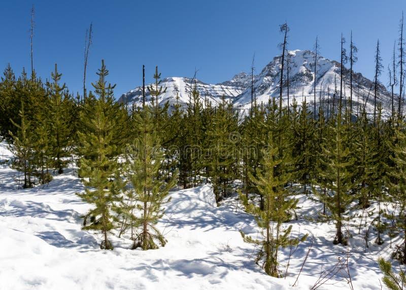 premier ressort de sc?ne hivernale magnifique en Colombie-Britannique provinciale Canada de parc de canyon de marbre images stock