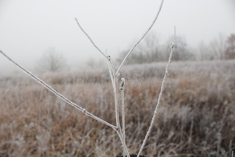 Premier souffle de gel blanc de l'hiver, champ tourné dans le blanc photos stock