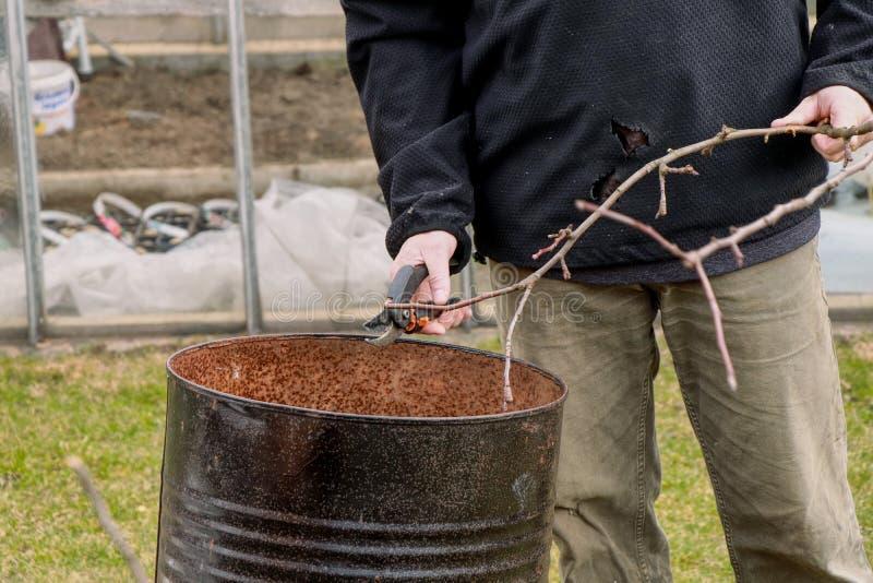 Premier travail de ressort sur le jardin Homme adulte équilibrant des branches Branches de coupes d'homme dans un baril noir Prem photo libre de droits