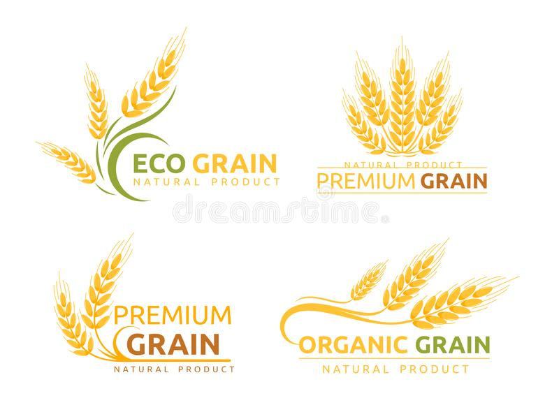 Premium grain flat vector logotype designs set. Organic cereal crops, natural product advertising. Ripe wheat ears. Cartoon illustrations with typography. Eco royalty free illustration
