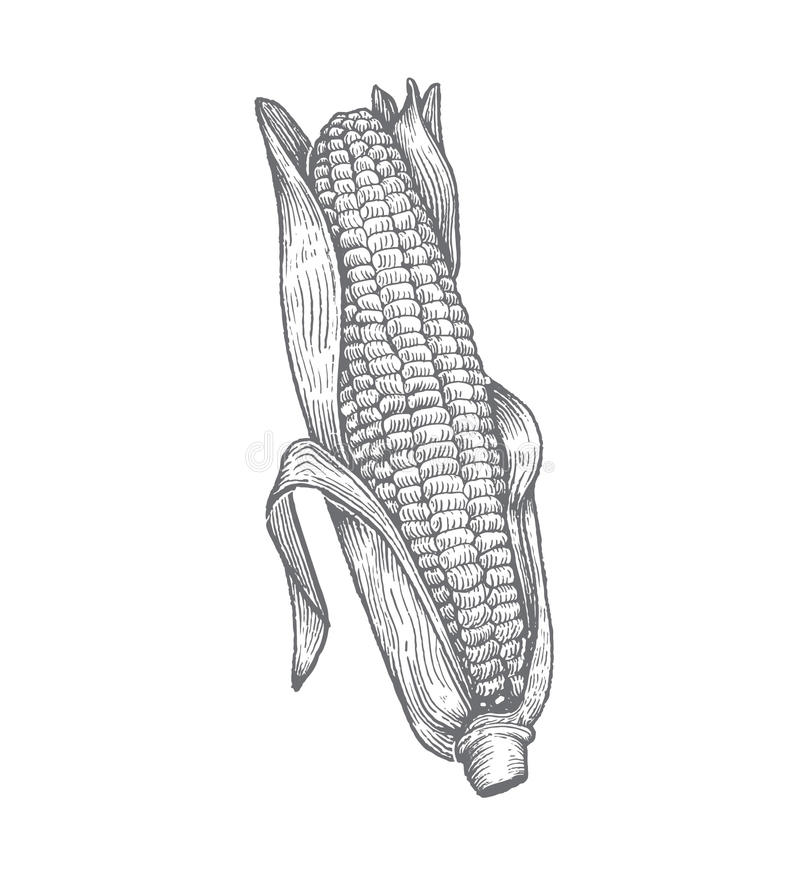 Premium Vector Woodcut Corn Illustration stock images