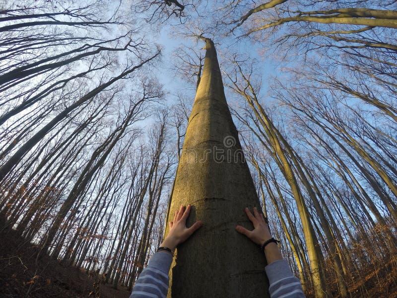 Prenda il legno! fotografie stock