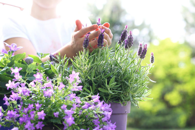 Prenda la cura delle vostre piante fotografia stock
