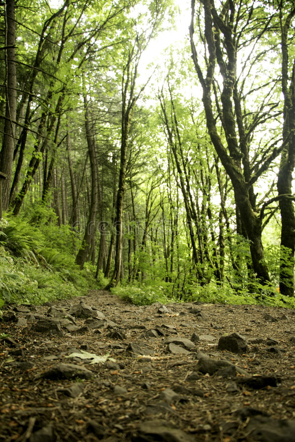 Prenda una respirazione profonda che fa un'escursione nella foresta immagine stock libera da diritti