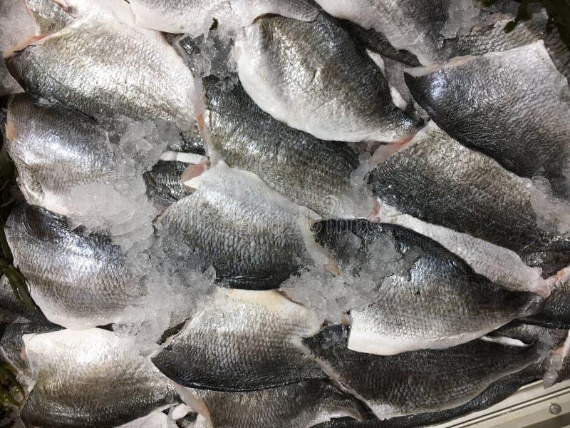 Prendederos de pescados frescos de la brema de mar de Dorade con hielo en el mercado, imagen del primer, fondo fotografía de archivo libre de regalías