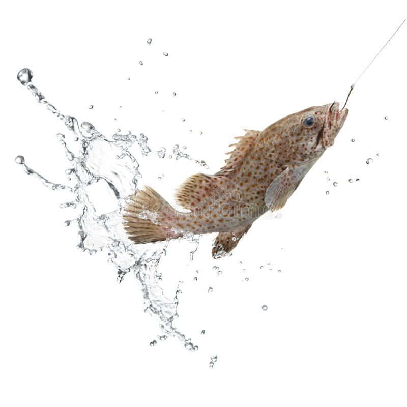 Prendedor dos peixes fotografia de stock royalty free