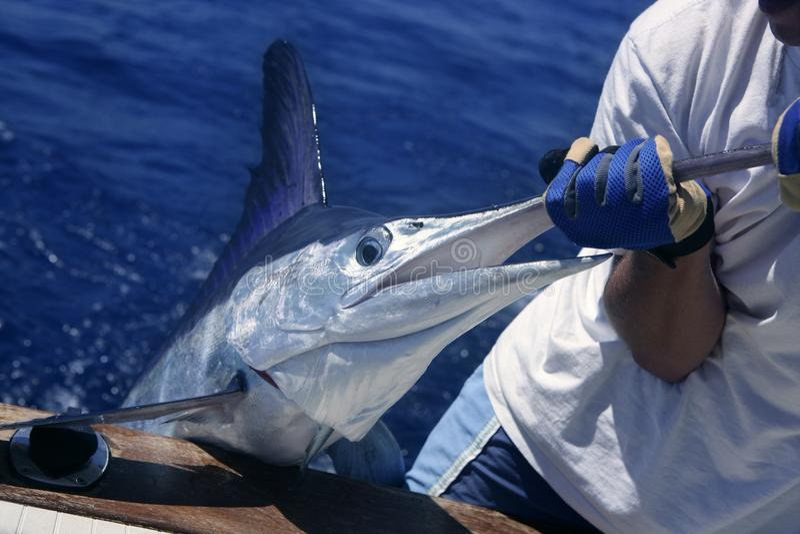 Prendedor e liberação do espadim branco do peixe agulha no barco foto de stock royalty free